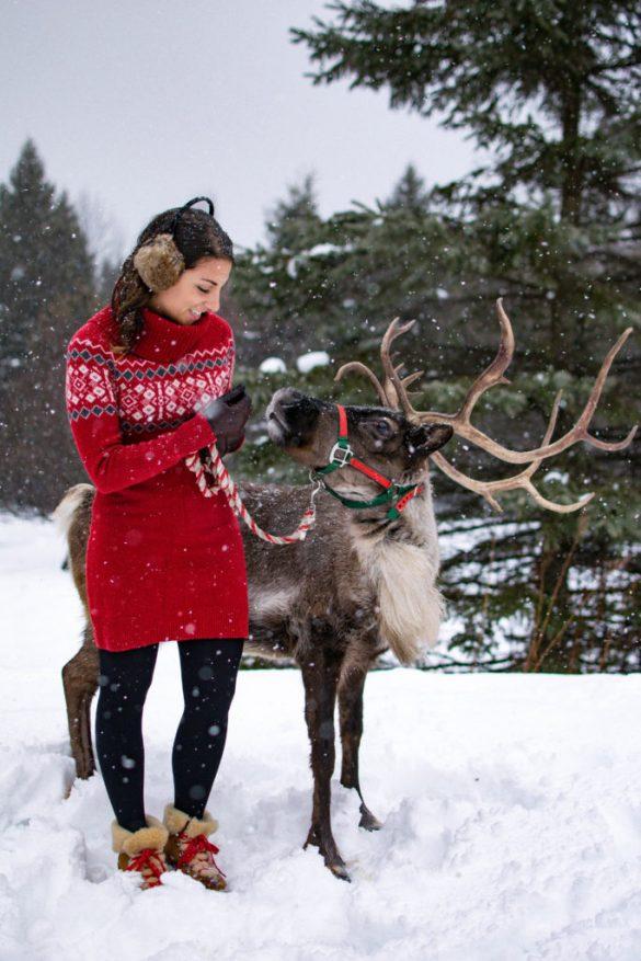 The Vermont Reindeer Farm