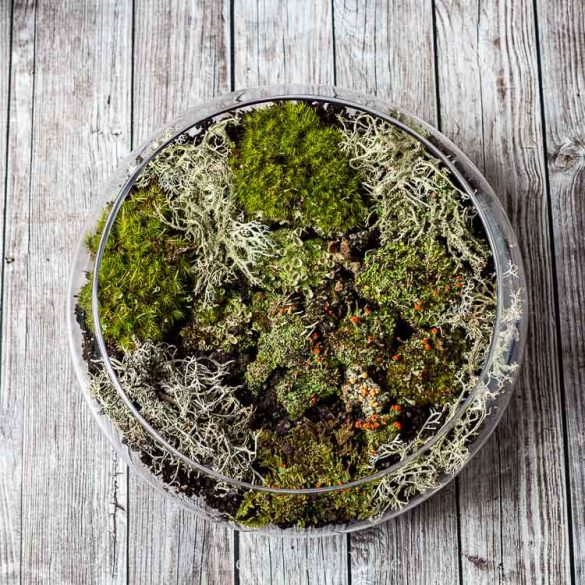 Create an Indoor Moss Garden – Natural Beauty in Your Home