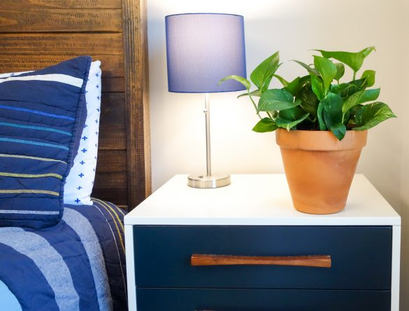 Plants That Help Purify The Air In Your Home