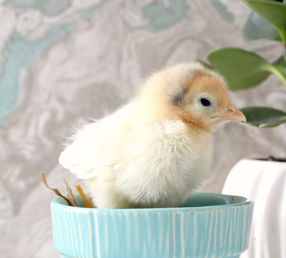 Spring Chick Photo Shoot Vol. 2