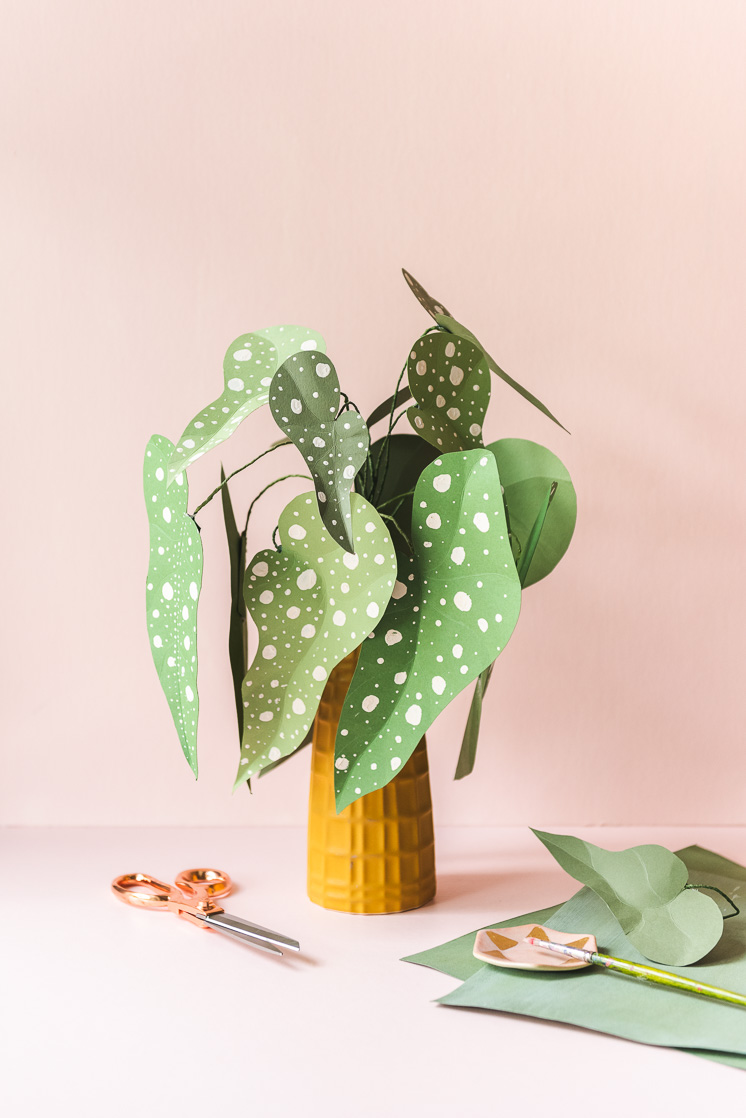 An Easy Houseplant Anyone Can Take Care Of