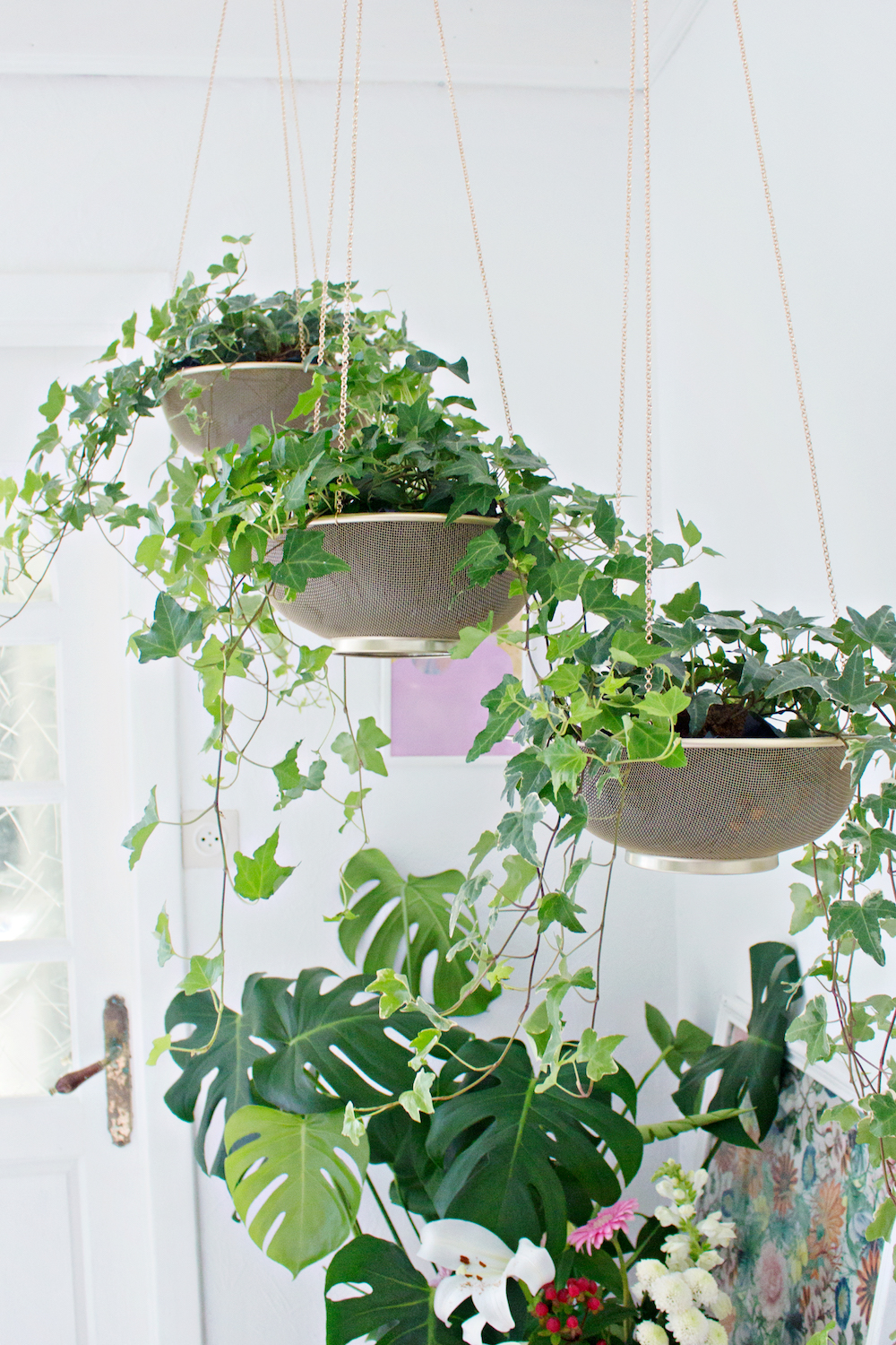 The Best Plants for Low Light Spaces