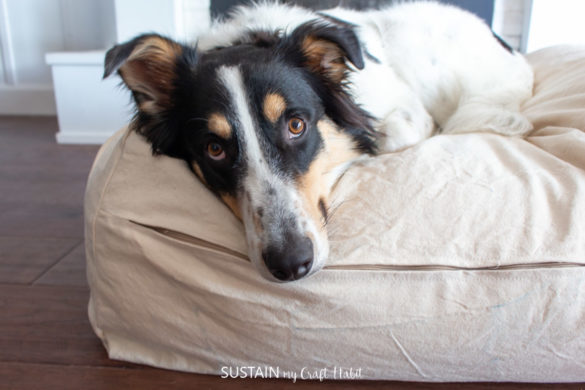 DIY Removable Dog Bed Cover