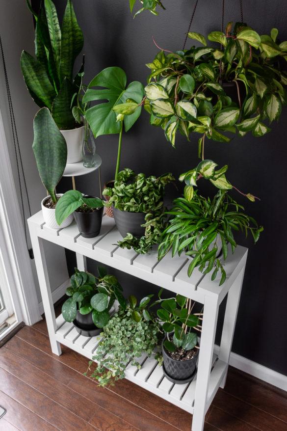 DIY Indoor Plant Stand Plans